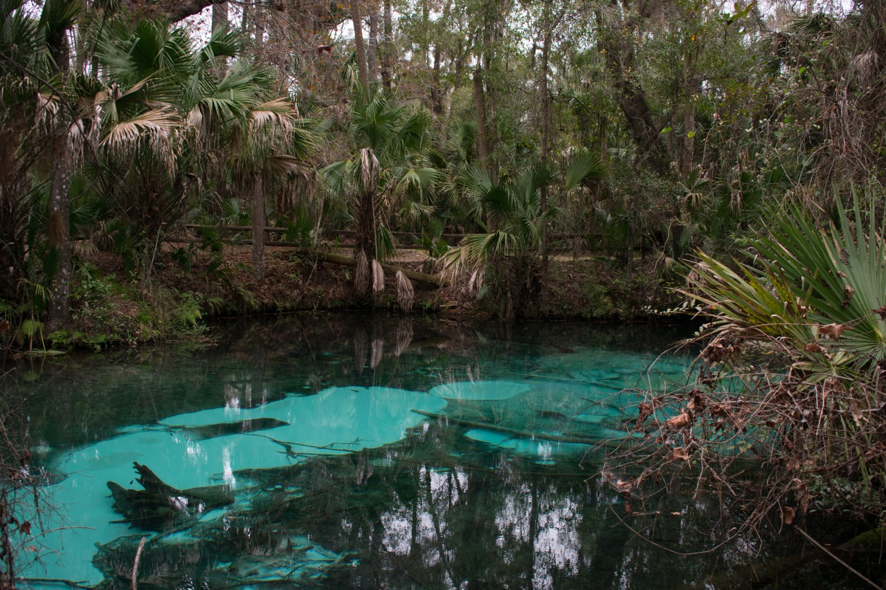 Ocala National Forest (Juniper Springs)